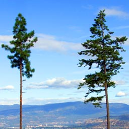 Living above it all in the Okanagan Valley